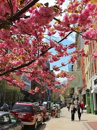 SoHo in New York - Blossom