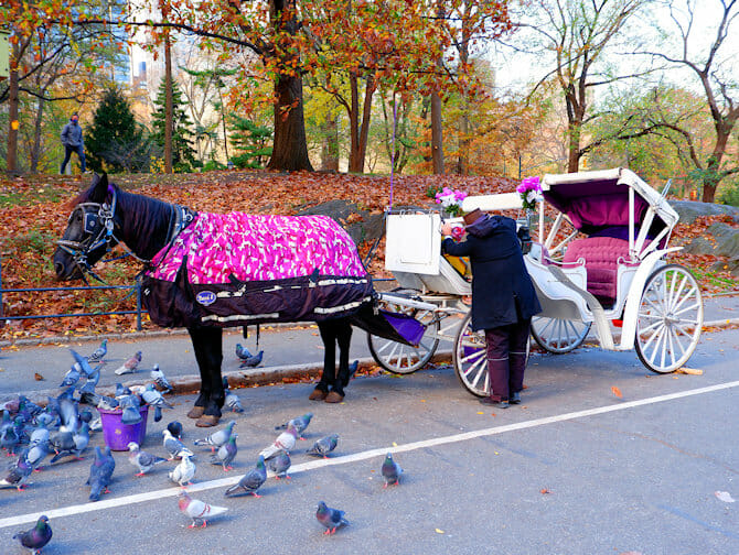 A Carriage ride in Central Park - guide