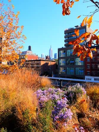 High Line Park in New York - View