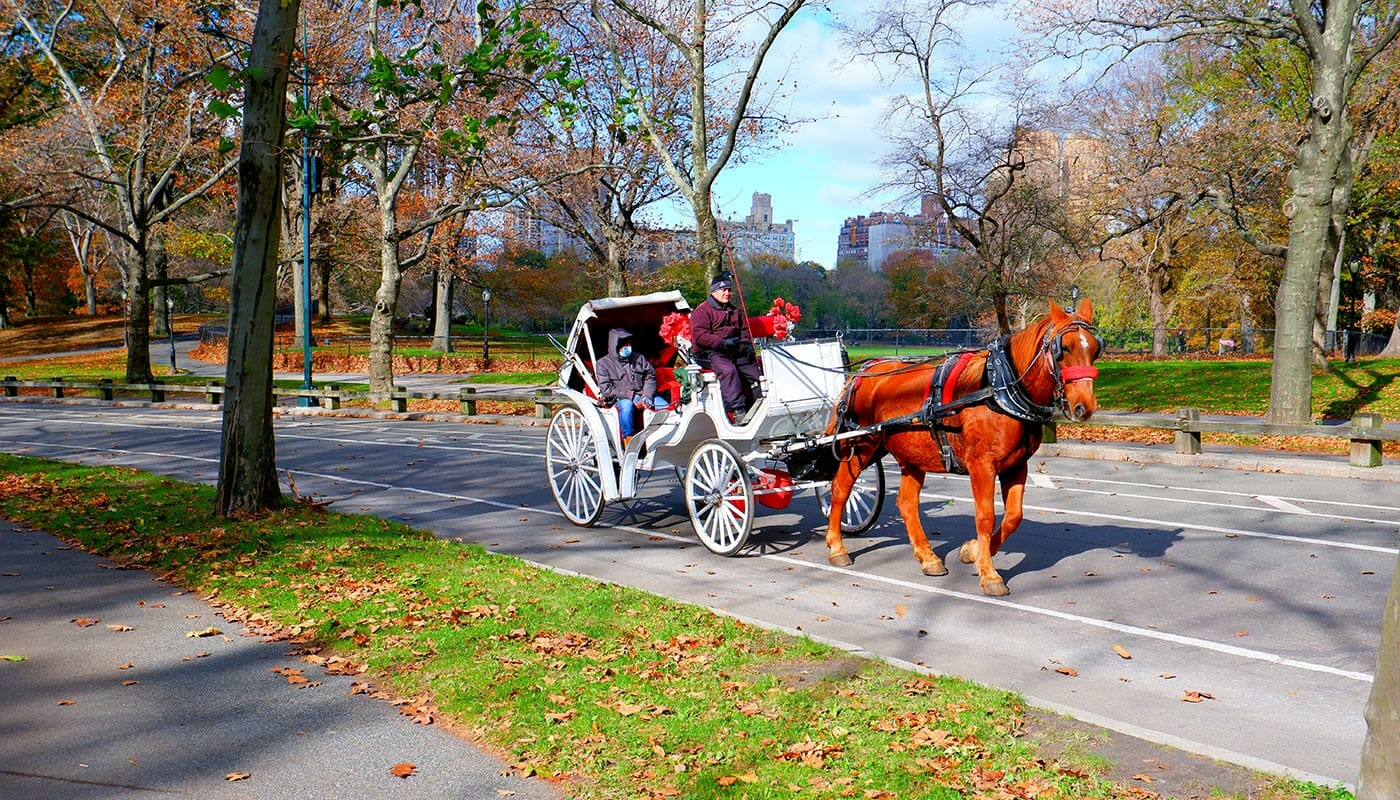 A Carriage ride in Central Park - carriages