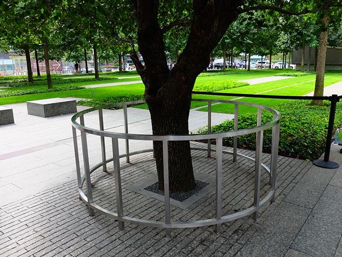 9/11 Memorial in New York - Survivor Tree