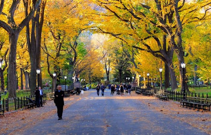 Central Park In New York - Fall