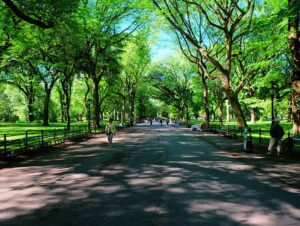Labor Day in New York - Walking in Central Park