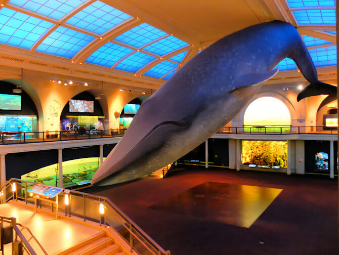 The American Museum of Natural History in New York - Ocean Life