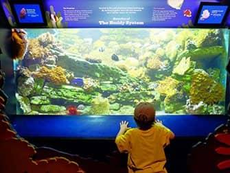 New York Aquarium - Fish